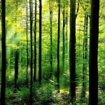 Luyện nghe Tiếng Anh bài 5: Trees in the Forest – Cây cối trong rừng